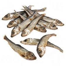 Fishy Treats